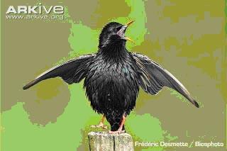 bird asdf